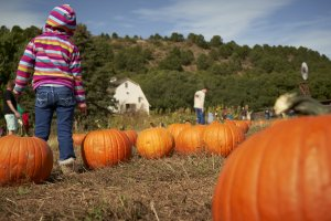 Small girl pointing to a pumpkin in a patch with Barn and windmill in background